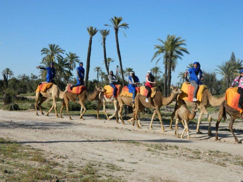 camel ride 65