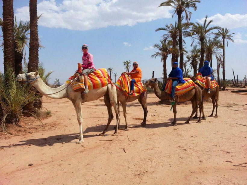 camel2 (Copier)